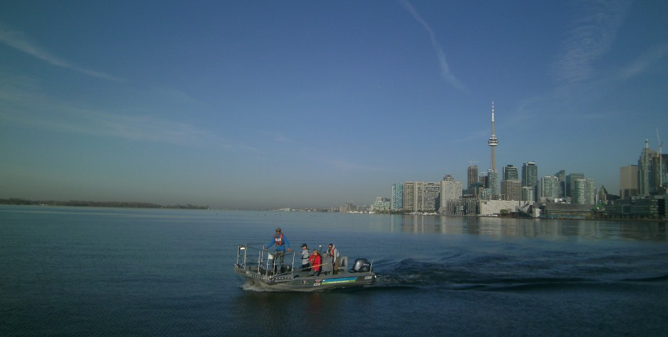 Spatial ecology of fish in Toronto Harbour Project Image